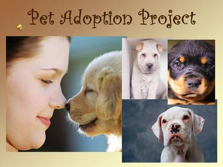 Pet Adoption Project. Members oBarbara MacDonald oBecky Snyder oHolly Spencer oMercedes Tejera oCassie Witten.