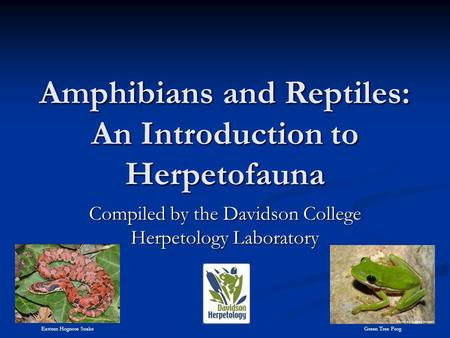 Amphibians and Reptiles: An Introduction to Herpetofauna Compiled by the Davidson College Herpetology Laboratory Eastern Hognose Snake Green Tree Frog.