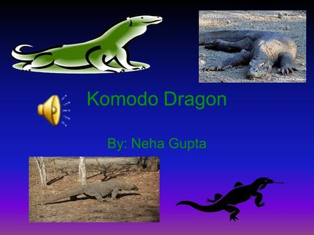 Komodo Dragon By: Neha Gupta Introduction Do you want to know about the biggest lizard in the world? The Komodo Dragon. Most people don't know about.