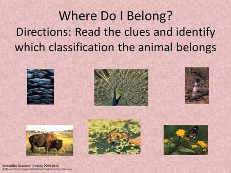 Where Do I Belong? Directions: Read the clues and identify which classification the animal belongs Armadillo Readers' Choice 2009-2010 © Round Rock Independent.