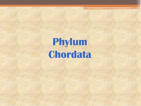 Phylum Chordata. Phylum Chordata Includes the following classes: ▫Class Myxini (hagfishes) ▫Class Cephalaspidomorphi (lampreys) ▫Class Chondrichthyes.