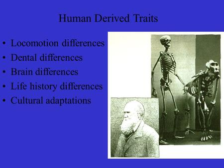 Human Derived Traits Locomotion differences Dental differences Brain differences Life history differences Cultural adaptations.