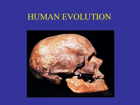 HUMAN EVOLUTION. Key Vocabulary Anthropoids – subgroup of primates Hominin (Hominid) – Paleoanthropology – Bipedal Brachiate.