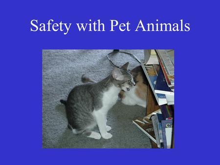 "Safety with Pet Animals. What is ""Safety""? ""the condition of being safe from undergoing or causing hurt, injury, or loss"" – Merriam-Webster Keeping oneself."