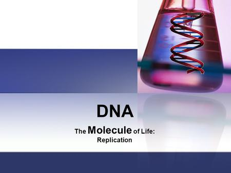 DNA The Molecule of Life: Replication. Replication: Why? When cells replicate, each new cell needs it's own copy of DNA. Where? Nucleus in Eukaryotes.