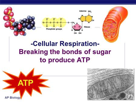 AP Biology 2006-2007 -Cellular Respiration- Breaking the bonds of sugar to produce ATP ATP.