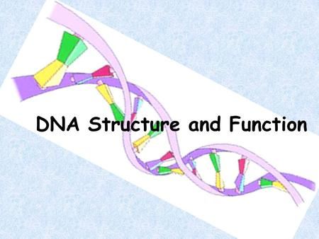 "DNA Structure and Function. Review! Nucleus : ""brain"" of the cell. Chromosomes: found in the nucleus."