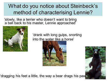 What do you notice about Steinbeck's method of characterising Lennie? 'slowly, like a terrier who doesn't want to bring a ball back to his master, Lennie.