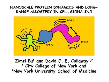 NANOSCALE PROTEIN DYNAMICS AND LONG- RANGE ALLOSTERY IN CELL SIGNALING Zimei Bu 1 and David J. E. Callaway 1,2 1 City College of New York and 2 New York.