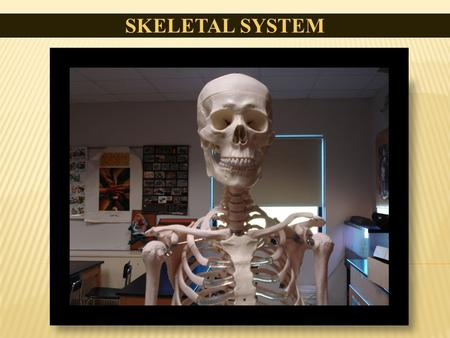 SKELETAL SYSTEM. Bone is made of the same type of minerals as limestone. Babies are born with 300 bones, but by adulthood we have only 206 in our bodies.