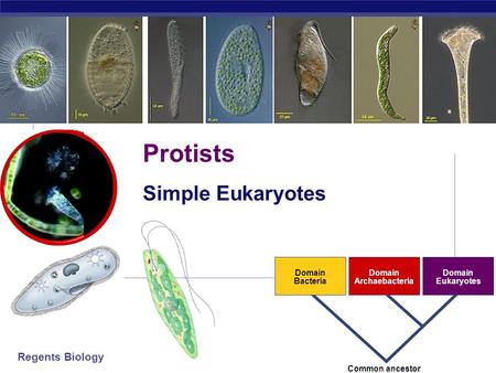 how archaea is similar to eukaryotes Cellular structure of bacteria and archaea in this section, we will discuss the basic structural features of both bacteria and archaea there are many structural, morphological, and physiological similarities between bacteria and archaea.