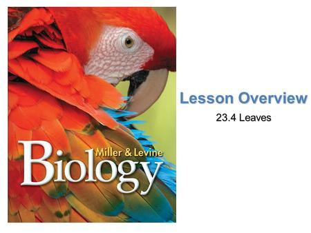 Lesson Overview 23.4 Leaves. Lesson Overview Lesson OverviewLeaves Anatomy of a Leaf To collect sunlight, most leaves have a thin, flattened part called.