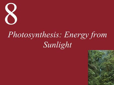 8 Photosynthesis: Energy from Sunlight. 8 Photosynthesis: Energy from Sunlight 8.1 What Is Photosynthesis? 8.2 How Does Photosynthesis Convert Light Energy.