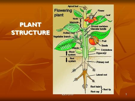 KRT-2010 1 PLANT STRUCTURE. KRT-2010 2 The Typical Plant Body The Root System Underground (usually) Underground (usually) Anchor the plant in the soil.