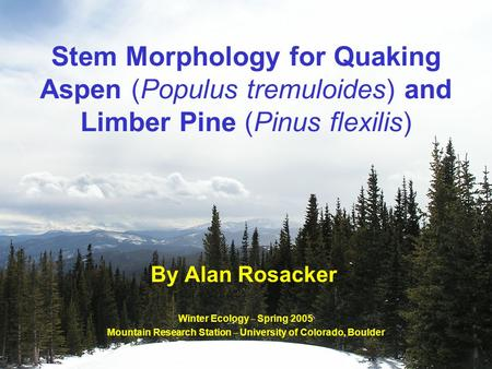 Stem Morphology for Quaking Aspen (Populus tremuloides) and Limber Pine (Pinus flexilis) By Alan Rosacker Winter Ecology – Spring 2005 Mountain Research.