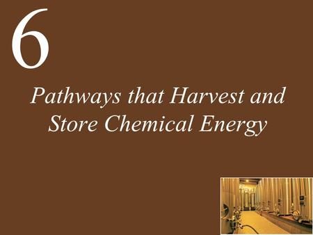 Pathways that Harvest and Store Chemical Energy 6.