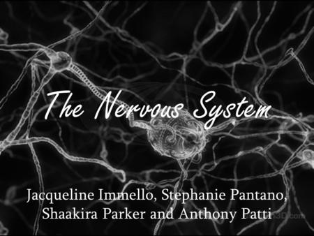 The Nervous System Jacqueline Immello, Stephanie Pantano, Shaakira Parker and Anthony Patti.
