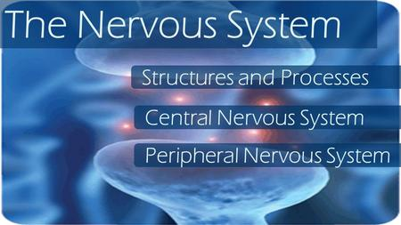 The Nervous System Structures and Processes Central Nervous System Peripheral Nervous System.