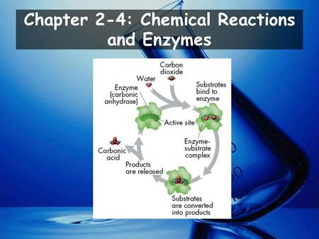 Chapter 2-4: Chemical Reactions and Enzymes. Explain how chemical reactions affect chemical bonds. Explain why enzymes are important to living things.