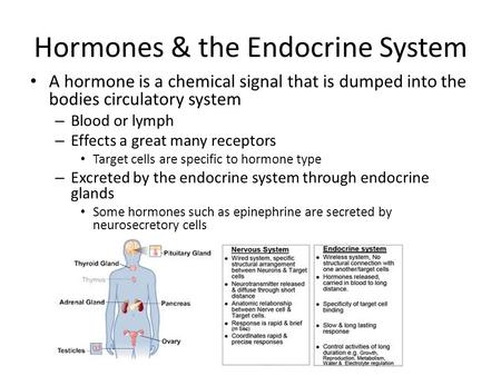 Hormones & the Endocrine System A hormone is a chemical signal that is dumped into the bodies circulatory system – Blood or lymph – Effects a great many.
