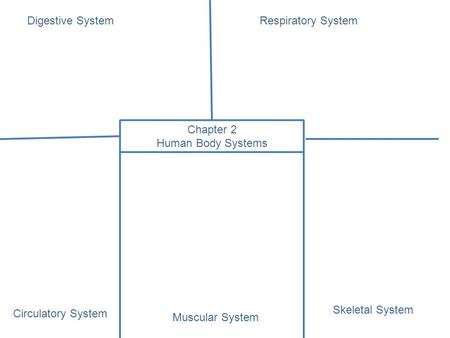 Chapter 2 Human Body Systems Digestive SystemRespiratory System Muscular System Circulatory System Skeletal System.