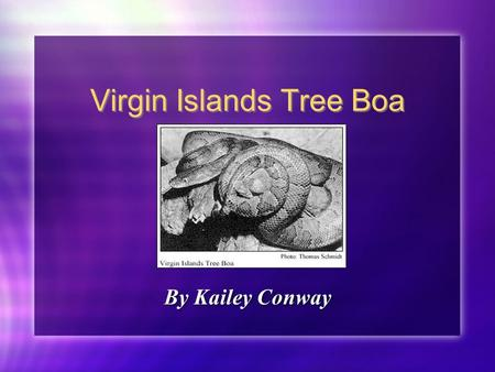 Virgin Islands Tree Boa By Kailey Conway. Facts A Species Survival Plan was started in 1990. This type of Boa is only found in Puerto Rico and the Virgin.