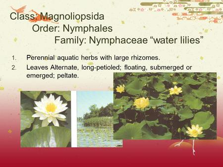 "Class: Magnoliopsida Order: Nymphales Family: Nymphaceae ""water lilies"" 1. Perennial aquatic herbs with large rhizomes. 2. Leaves Alternate, long-petioled;"