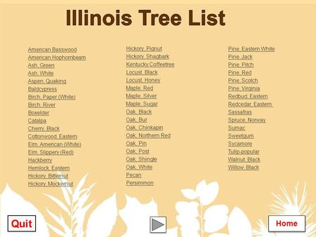 Illinois Tree List Quit Home Hickory, Pignut American Basswood