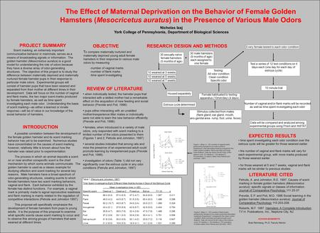 The Effect of Maternal Deprivation on the Behavior of Female Golden Hamsters (Mesocricetus auratus) in the Presence of Various Male Odors PROJECT SUMMARY.
