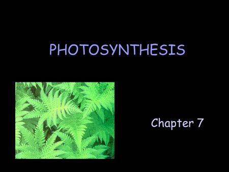 PHOTOSYNTHESIS Chapter 7