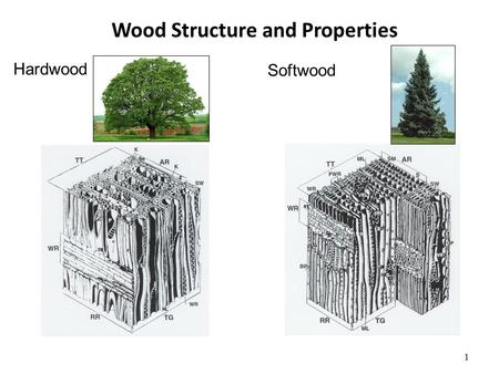 Wood Structure and Properties