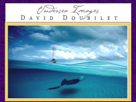 . Considered the leading underwater photographer in the world, Doubilet has introduced a generation of readers to the mysteries and wonders of the deep.
