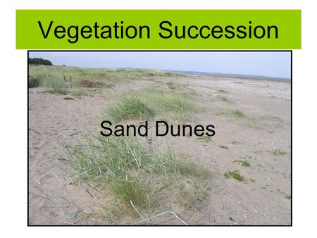 Vegetation Succession Sand Dunes. Plant Succession Evolution of plant communities From pioneer species to climax vegetation Related to change in the environment.