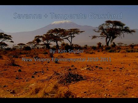 Savanna Vs. Grassland: What's the difference? Temperate Grassland Great range of temperature Adequate, regular precipitation Occur approximately midway.