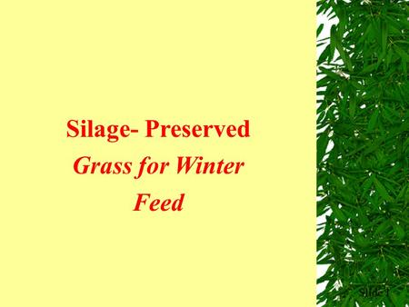 Slide 1 Silage- Preserved Grass for Winter Feed. Factors That Affect Silage Quality  Use of additives  Compaction  Speed of filling & sealing the pit.