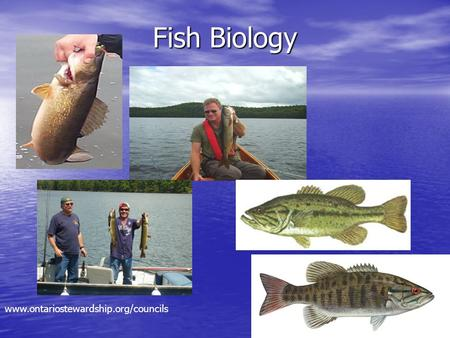 Fish Biology www.ontariostewardship.org/councils.