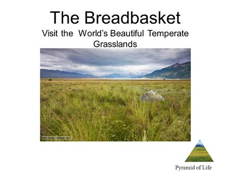 The Breadbasket Visit the World's Beautiful Temperate Grasslands Pyramid of Life Travel.