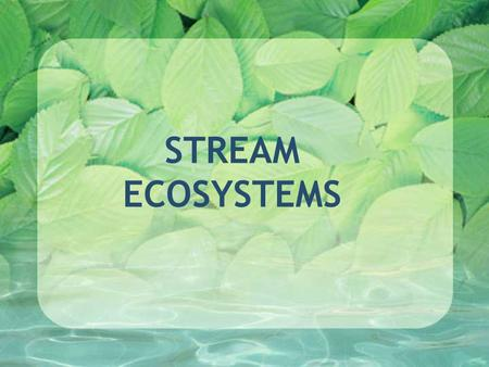 STREAM ECOSYSTEMS. What is a stream? A flowing body of water confined within a bed and banks Does a stream really end at the edge of the water?