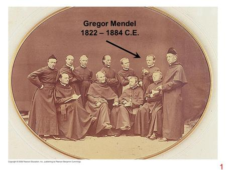 1 Gregor Mendel 1822 – 1884 C.E.. Stamens Carpel Parental generation (P) TECHNIQUE 1 2 3 4 2.