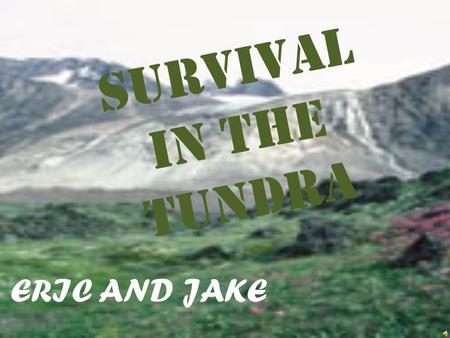 SURVIVAL IN THE TUNDRA ERIC AND JAKE AMADJUAK LAKE BOG ATLANTIC OCEAN OWL NEST TRAILS SHELTER CAROBOU HUNTING GROUNDS 0 1 mi. radius =moss, berries,