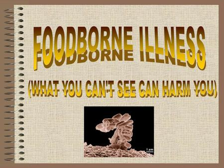 The Most Common Foodborne Bacterial Illnesses are Caused by: E-coli 0157:H7 Campylobacter Salmonella.