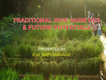 PRESENTED BY 1 C.H SAPUMANAGE. CONTENT  Introduction  Specific characteristics  Categories of traditional varieties  Podi wee, Murungakayan, Pachchaperumal,