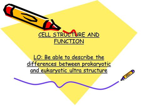 CELL STRUCTURE AND FUNCTION LO: Be able to describe the differences between prokaryotic and eukaryotic ultra structure.