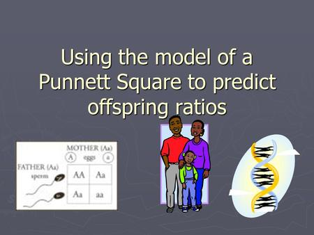 Using the model of a Punnett Square to predict offspring ratios.