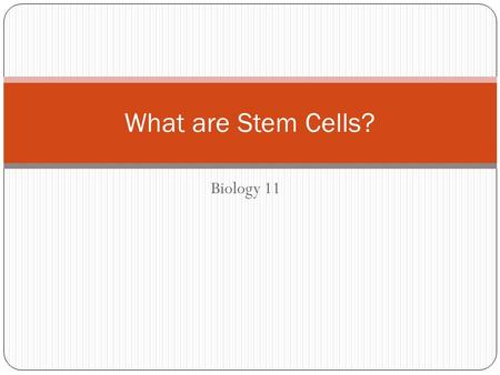 Biology 11 What are Stem Cells?. Stem Cells Basically, stem cells are cells that are not assigned a functional job in the body. (Undifferentiated cells)
