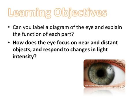 Learning Objectives Can you label a diagram of the eye and explain the function of each part? How does the eye focus on near and distant objects, and respond.