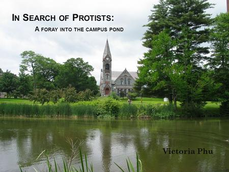 I N S EARCH OF P ROTISTS : A FORAY INTO THE CAMPUS POND Victoria Phu.