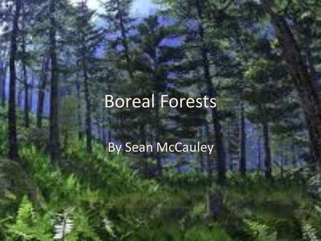 Boreal Forests By Sean McCauley.