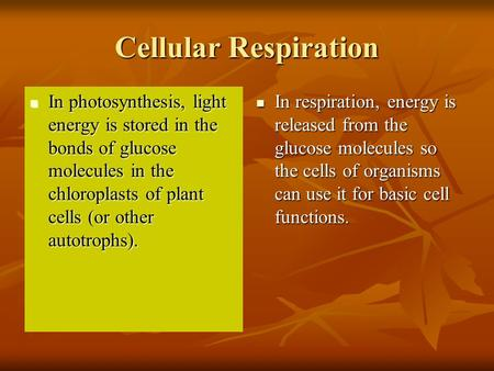 Cellular Respiration In photosynthesis, light energy is stored in the bonds of glucose molecules in the chloroplasts of plant cells (or other autotrophs).