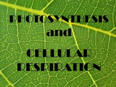PHOTOSYNTHESIS and CELLULAR RESPIRATION. SECTION 1 Photosynthesis.